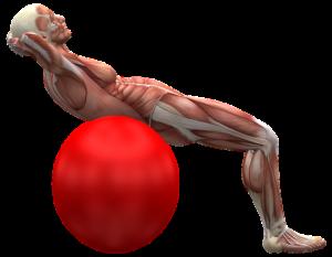 Fast alle Muskeln im Körper können von Muskelentzündungen betroffen sein